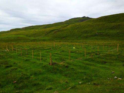 Deer monitoring enclosure